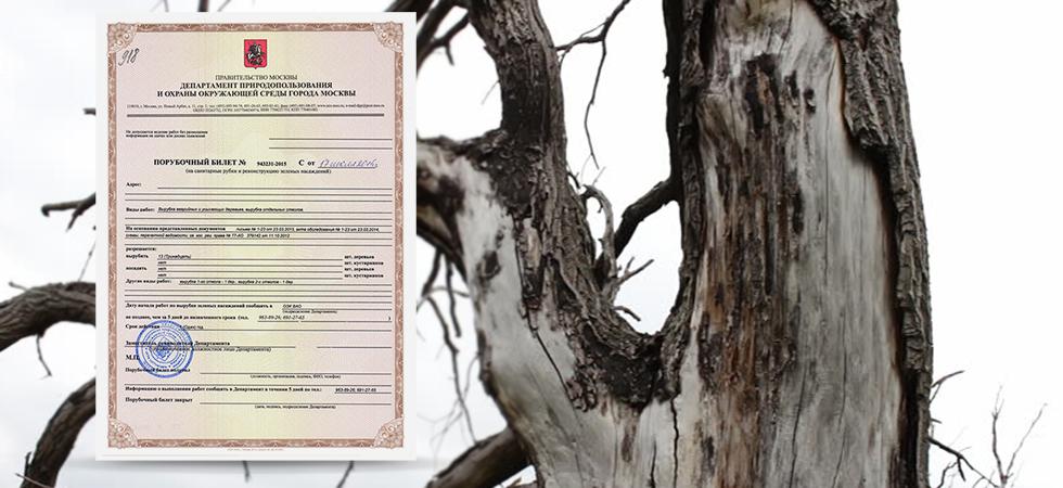 сухое дерево порубочный билет